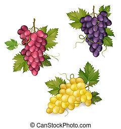 Diferentes variedades de uvas