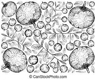 diospyros, filipendula, lucida, mano, feroniella, plano de fondo, fruits, dibujado