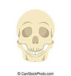 Diseño de ilustración de cráneo humano