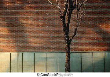 diseño, pared, desván, shading., luz, industrial, ladrillo, natural, al aire libre, escena, seco, moderno, árbol
