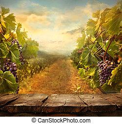 Diseño Vineyard