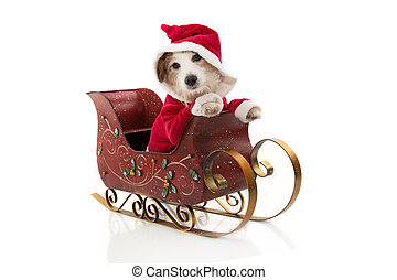 disfraz, dentro, claus, perro, holidays., plano de fondo, sleigh, aislado, navidad, santa, blanco