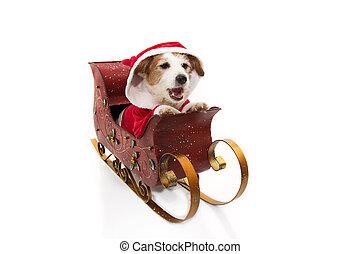 disfraz, dentro, claus, perro, plano de fondo, sleigh, navidad., aislado, santa, blanco