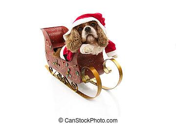 disfraz, dentro, divertido, perro, claus, holidays., plano de fondo, sleigh, aislado, navidad, santa, blanco