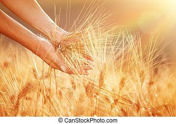 Disfrutando del campo de trigo dorado