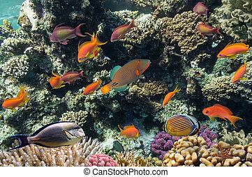 Disparos de coral vívidos con peces