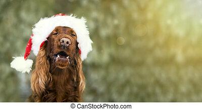 Divertida pancarta de perro de navidad