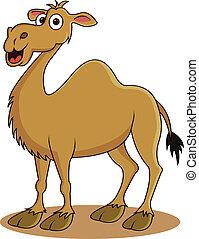 divertido, caricatura, camello