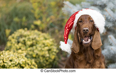 divertido, feriado, santa, navidad, feliz, sombrero, perro