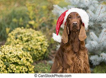 Divertido perro guardián de la Navidad