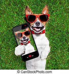Divertido perro selfie