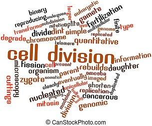 División de celdas