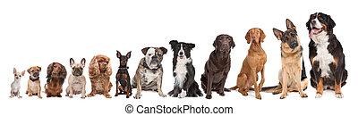 doce, fila, perros