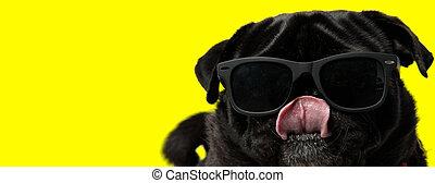 doguillo, boca, perro, hermoso, llevar lentes de sol, fresco, paliza