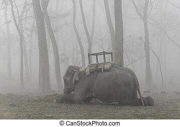 domesticado, acostado, elefante, abajo