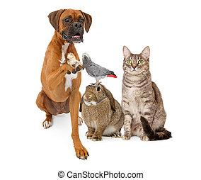 dometic, grupo, mascotas, juntos, sentado