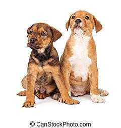 Dos adorables cachorros cruzados