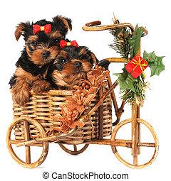 Dos adorables cachorros en bicicleta navideña