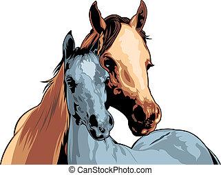 Dos caballos.