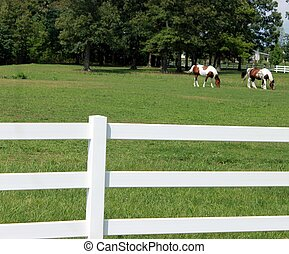 Dos caballos de litro en el rancho con cerca blanca