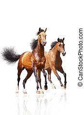 Dos caballos en blanco