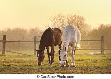 Dos caballos en el rancho