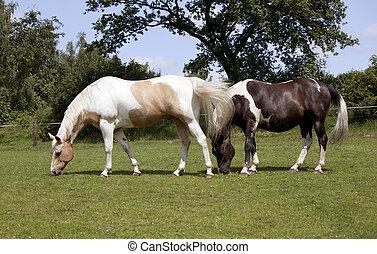 Dos caballos en pasto