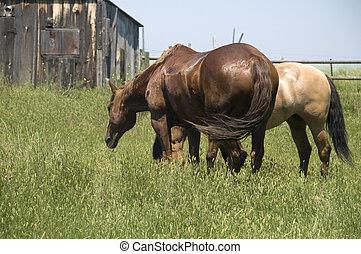 Dos caballos pastando sobre la hierba