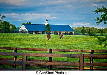 Dos caballos pura sangre pastando en un campo