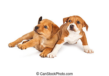 Dos cachorros asustados