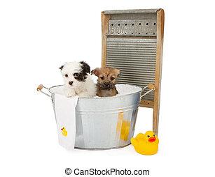 Dos cachorros bañándose