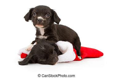 Dos cachorros de Navidad