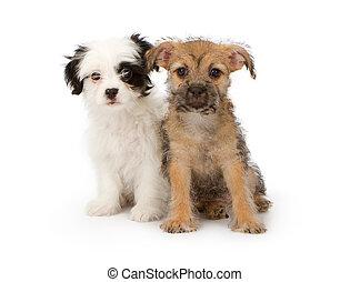 Dos cachorros de raza mixta