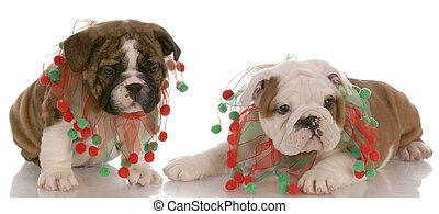 Dos cachorros ingleses con bufandas de Navidad