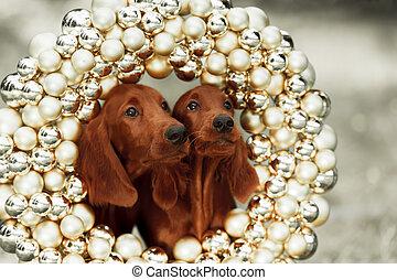 Dos cachorros serristas, Navidad