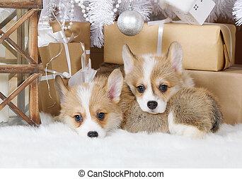 Dos cachorros welsh corgi pembroke bajo el árbol de Navidad