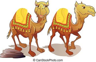 Dos camellos, ilustración