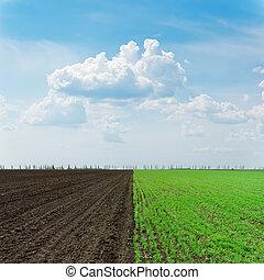 Dos campos de agricultura bajo el cielo nublado