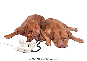 Dos deogs al teléfono
