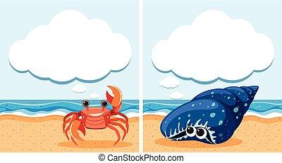 Dos escenas con cangrejo y caparazón