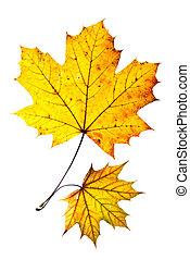 Dos hojas de otoño