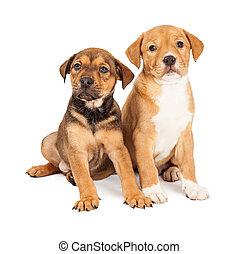 Dos lindos cachorros cruzados