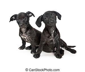 Dos lindos cachorros de raza negra