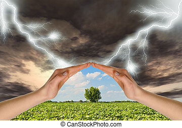 Dos manos conservan un árbol verde contra una tormenta