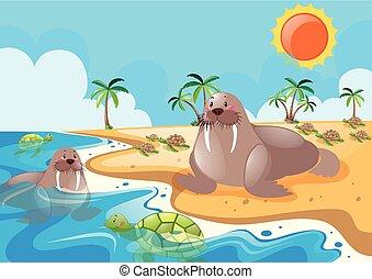 Dos morsas en la playa