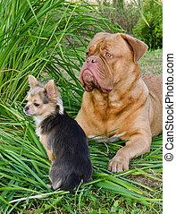 Dos perros amigos tirados en la hierba