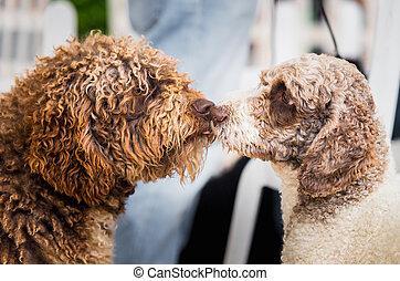 Dos perros besándose