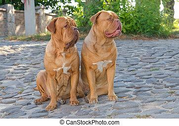Dos perros en la calle