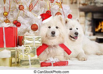 Dos perros samoyed en Navidad