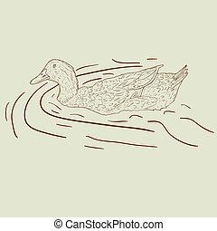 duck., salvaje